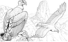 Andean condors coloring page from Condors category. Select from 31983 printable crafts of cartoons, nature, animals, Bible and many more. Dark Art Drawings, Bird Drawings, Cartoon Drawings, Flying Bird Silhouette, Andean Condor, Fly Drawing, Red Bird Tattoos, Horse Flowers, Tattoos
