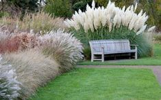 Ornamental grasses are a great, low-maintenance way to spice up your landscape! Ornamental grasses are a great, low-maintenance way to spice up your landscape! Ornamental Grass Landscape, Ornamental Grasses, Landscape Plans, Landscape Design, Landscape Timbers, Miscanthus Gracillimus, Grass Alternative, Ideas Para El Patio Frontal, Full Sun Perennials
