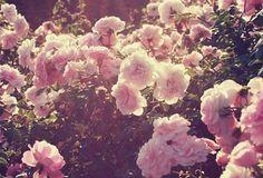 ajjj kocham kwiaty ******