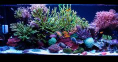 Rattters's | November 2012 Tank of the Month | UltimateReef.Com