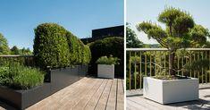 Afbeeldingsresultaat voor walfilii Dutch Gardens, Garden Landscaping, Landscape Architects, Plants, Life, Top, Gardens, Balconies, Front Yard Landscaping