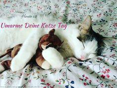Heute ist Umarme Deine Katze Tag  #Heute #Tag #Welttag #Today #Day #SpecialDay #Worldday
