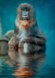 take a bath :-) by Detlef Knapp on 500px