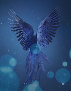 Green Background Video, Best Background Images, Fish Wallpaper Iphone, Wallpaper Backgrounds, Angel Pictures, Cool Pictures, 3d Animation Wallpaper, Good Morning Animation, Angel Wings Art