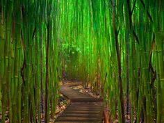 Bamboo wallpaper oriental wallpaper asian wallpaper hawaii-asia, asian, asian backgrounds, asian wallpaper, asian walls, bamboo, bamboo fondo de escritorio, bamboo wall, bamboo wallpaper, fondo 1440, hawaii, houses, interior, Room ideas, Room ideasforhouses, Room ideasforhouses.com, oriental backgrounds, oriental wallpaper, wall, wallpaper, wallpaper asian, wallpaper hawaii, wallpaper oriental, wallpapers orientales