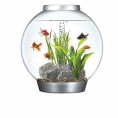 Biorb Setup Ideas Fish Tanks Pinterest Products And