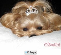 Princess Tiara Dog Barrette - Clear Crystals (also in pink)