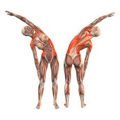One-arm advanced right bend - Konasana advanced one arm right - Yoga Poses…