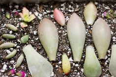Great blog on succulents. I like the leaves arranged nicely.