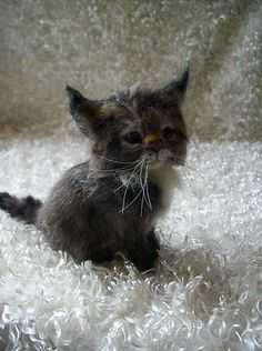 kitten...another amazing job of needle felting