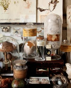 Cabinet of Curiosities | Mademoiselle Loulou