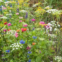 Garden Design Layout - New ideas Garden Plants, House Plants, Permaculture Design, Layout Design, Wild Flowers, Garden Design, Creative, Gardens, Camping