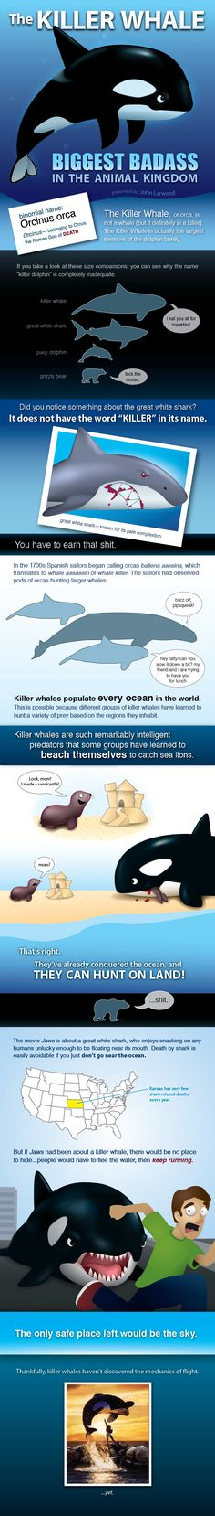 In honor of shark week please enjoy this infographic about the #killerwhale #infographic