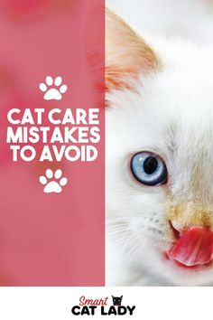Taking care of a cat is no easy feat and  simple mistakes can often lead to disaster. Here are some cat cares mistakes  you need to avoid.    #smartcatlady #cat #mistakes #care