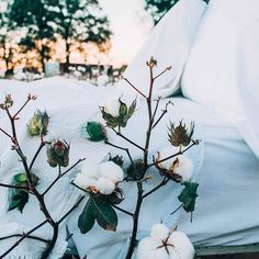 All the cotton in our fabrics come directly from the fields we farm in Lawrence and Colbert counties in North Alabama.