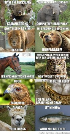 Animal Meme conversation! Hahaha I seriously couldn't stop laughing!