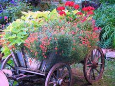 My goat cart planter.
