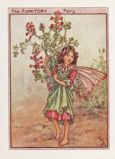 Flower Fairies: THE FUMITORY FAIRY Vintage Print c1930 by Cicely Mary Barker