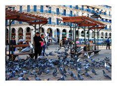 gallerie photo alger | Les pigeons d'Alger, a photo from Alger, Coast | TrekEarth