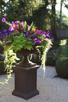 Place an urn on a pillar for height. This is a beautiful combination of plants!