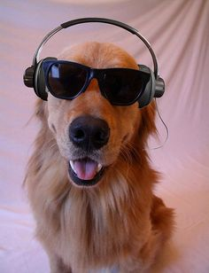 Music loving dog with swag!