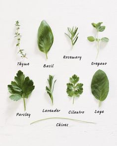 Wondering how to grow herbs? All it takes is a sunny ledge for growing herbs in pots, and you'll have fresh herbs for your cooking all summer long. Spices And Herbs, Fresh Herbs, Herb Garden, Vegetable Garden, Growing Herbs In Pots, Parsley Growing, Parsley Plant, Masterchef, Couple Cooking
