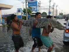 Thailand animals - Search