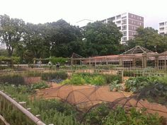 Cape Town Dutch Company Gardens fruit and veg section reinvented