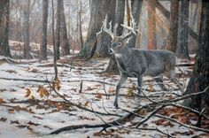 Whitetail Deer Pictures, Whitetail Deer Hunting, Deer Photos, Deer Pics, Whitetail Bucks, Wildlife Paintings, Wildlife Art, Animal Paintings, Deer Paintings