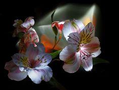 DE TODO UN POCO: REFLEXIONES de  Deepak Chopra