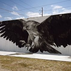 .@instagrafite | amazing large scale hawk