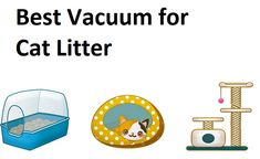 Want to suck up poop gravel, aka cat litter? These are the 3 best vacuums. Vacuum Reviews, Pet Allergies, Winners And Losers, Best Vacuum, Vacuums, Things To Come, Cats, Gatos, Vacuum Cleaners