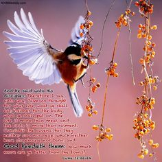 Bible Verses Kjv, Luke 12, King James, Bird, Animals, Animales, Animaux, Birds, Animal