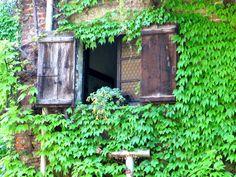 Τα φυτά που είναι βόμβες οξυγόνου – Πάρτε τουλάχιστον ένα στο σπίτι σας | Μυστικά ομορφιάς | mystikaomorfias.gr Trees To Plant, Indoor Plants, Aquarium, Arch, Outdoor Structures, Garden, Home Decor, Furniture, Inside Plants