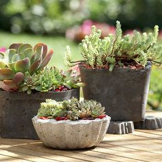 Here's a use for those lidless plastic storage containers: Make lightweight hypertufa pots, ideal for succulent plants.