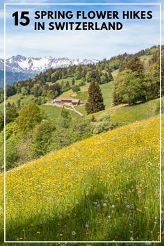 The best spring flower hikes in Switzerland for April to June, to see cherry blossoms, crocus, narcissus, dandelions and wildflowers. Click through for trail maps, directions and all the details you need to plan your hike. Best Of Switzerland, Switzerland Travel Guide, Hiking Europe, Hiking With Kids, Bucket List Destinations, Trail Maps, Mountain Hiking, Best Hikes, Dandelions