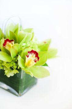 small green orchid arrangement