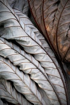 Lines, neutrals found in nature. Will look at using repetition of line throughout the space Natural Structures, Natural Forms, Natural Texture, Leaf Texture, Texture Design, Patterns In Nature, Textures Patterns, Art Grunge, Dry Leaf