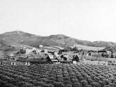 Rural East Hollywood, circa 1905. Courtesy of the Title Insurance and Trust, and C.C. Pierce Photography Collection, USC Libraries.