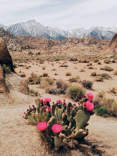 flores do deserto - the cactus and its flowers Desert Dream, Desert Life, Desert Art, Desert Flowers, Desert Cactus, Desert Plants, Arizona Cactus, Desert Colors, Cactus Y Suculentas