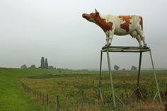 Roodbonte koe door Gerry van der Velden in Heesselt.