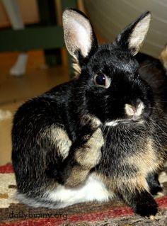Bunny freezes mid-scratch
