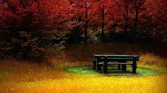 What a lovely #November