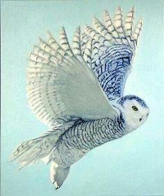 Flow blue owl? Wink