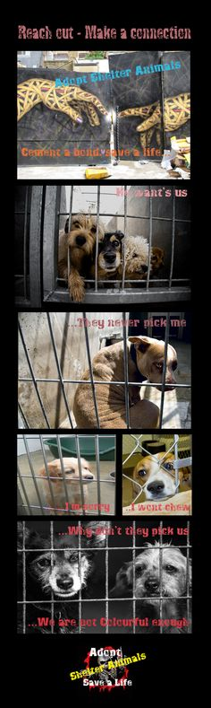 """Adopt a shelter Animal!"" - ""Make a connection!"" - ""cement a bond that will span a life time!"" -""Save a life Please!"""