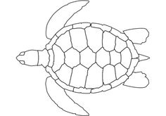 The Shape Of The Turtle Coloring Page