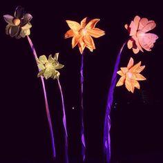 #winterlichster #palmengarten #palmengartenfrankfurt #frankfurt #frankfurtammain #blumen #flowers