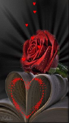 Discover & share this Animated GIF with everyone you know. GIPHY is how you search, share, discover, and create GIFs. Flowers Gif, Beautiful Rose Flowers, Beautiful Gif, Roses Gif, Heart Images, Love Images, Love Pictures, Gif Pictures, Bing Images