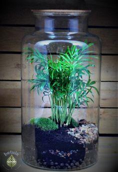 las w słoiku, rośliny zamknięte w szkle Terrarium Bowls, Build A Terrarium, Air Plant Terrarium, Succulent Terrarium, Bottle Terrarium, Bottle Garden, Glass Garden, Small Gardens, Outdoor Gardens