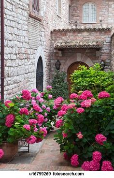 Medieval stone buildings and decorative pink hydrangeas